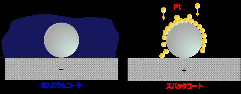 osumiumuko-tonoko-thingujyoutainohikaku